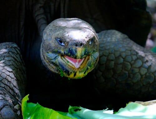 Les Galapagos – L'archipel des îles enchantées