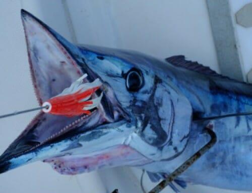Pêche et chasse sous-marine en Polynesie Française