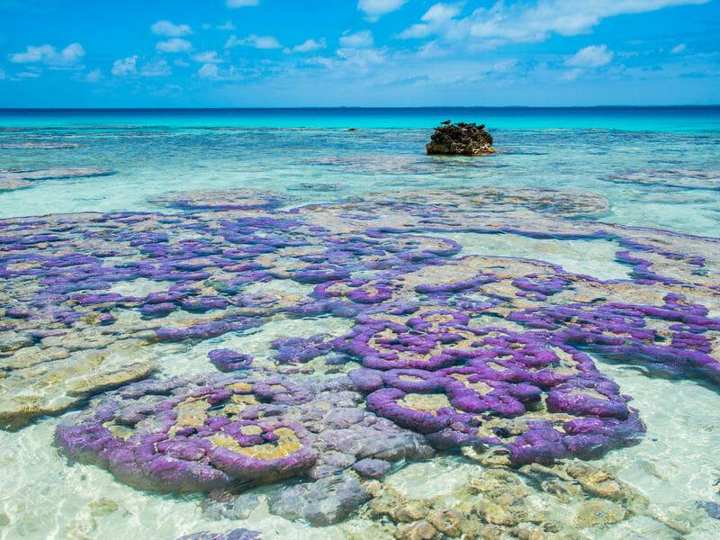 Coral heads in the Tuamotu islands